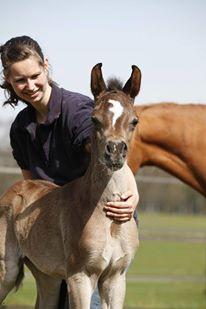 Nafiesa Arabians footer