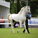 Nafiesa Makito Silver Medal at the Nat C-Show in ST Oedenrode